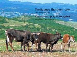 boekje rhodopen runderen